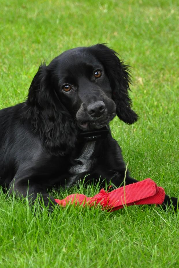 This Is Wiltshire: Pewsey family fear their pet has been dognapped