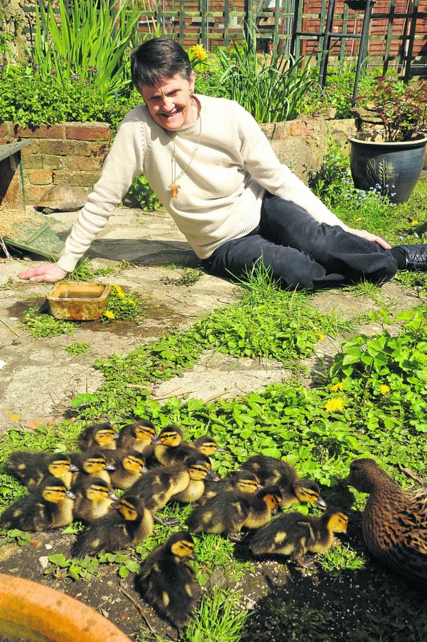 This Is Wiltshire: Sue Reed keeps a weather eye out on her brood