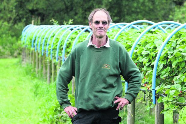 This Is Wiltshire: Owner Norman Parry at Lotmead Farm, near Swindon, which is famous for its strawberry crop