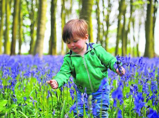 This Is Wiltshire: Max enjoys a display of bluebells at the weekend