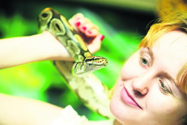 This Is Wiltshire: Roy the python and Hazel Williams