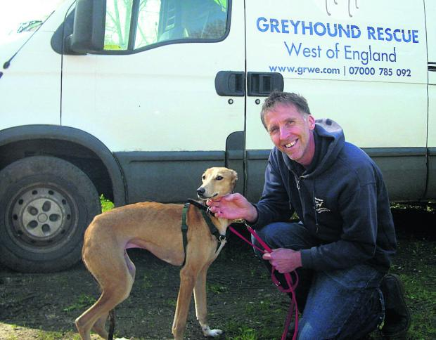 This Is Wiltshire: Stuart Parslow from Greyhound Rescue West of England with lurcher Perry