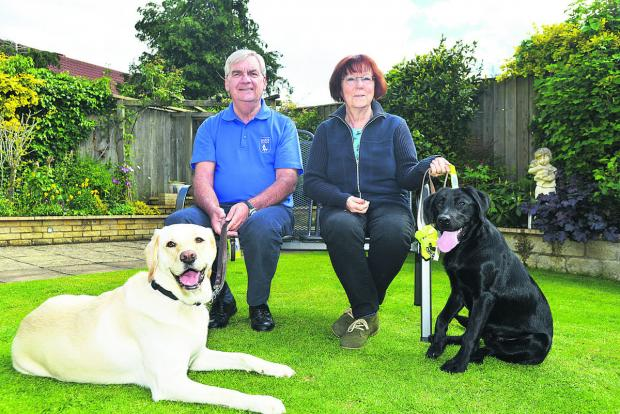 This Is Wiltshire: Alan Fletcher has raised £30,000 in his Joy appeal in memory of his guide dog. He is pictured with dogs Nutmeg, Joy's new namesake and puppy walker Barbara Paul