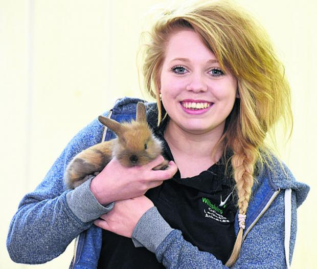 This Is Wiltshire: Amber Keighley, an animal management student, with a lionhead lop rabbit