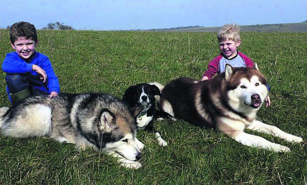 This Is Wiltshire: Animal charity fundraiser, Alfie Waker, aged nine, has teamed up with his little brother Charlie to help abandoned Malamute dogs