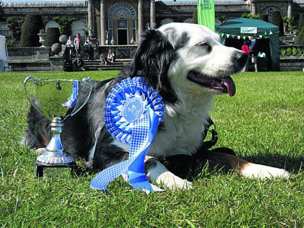 This Is Wiltshire: Rex, from, Swindon, one of last year's Bowood show winners