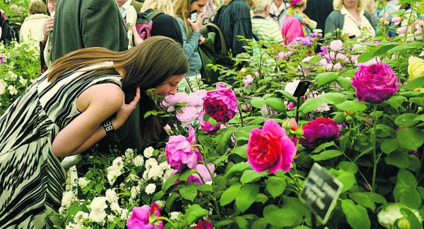 This Is Wiltshire: Take part in a blooming great show