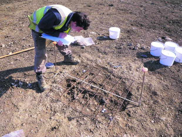 This Is Wiltshire: An archaeologist at the Ridgeway Farm development in Swindon, where excavation work has unearthed evidence of an Iron Age settlement