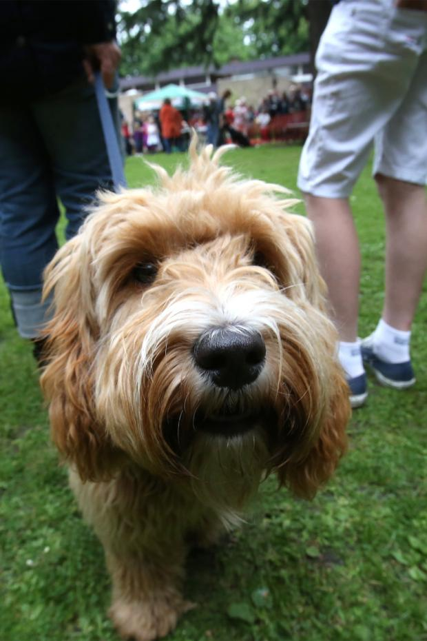 This Is Wiltshire: Dogs will be chasing fun prizes at family day