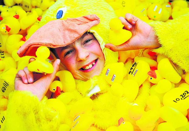 This Is Wiltshire: Joseph Walker gets lost in a sea of yellow ducks ahead of the annual race