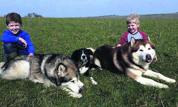 This Is Wiltshire: Alfie and Charlie Waker, with Mouse, Morris and Fizz, raised £370 for Alaskan Malamutes with a raffle and cake sale