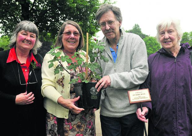 This Is Wiltshire: From left, Linda Gulwell, Ivy Ward's children Mary Ward and William Ward, and Liz Kirk plant a rose in honour of Red Cross stalwart Ivy Ward