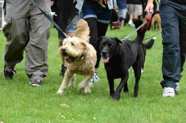 This Is Wiltshire: Lacock Dog show will support horse cause