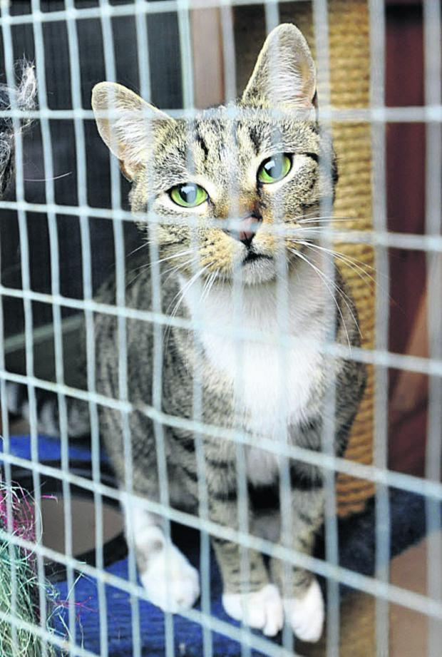 This Is Wiltshire: Cats like this one need new homes