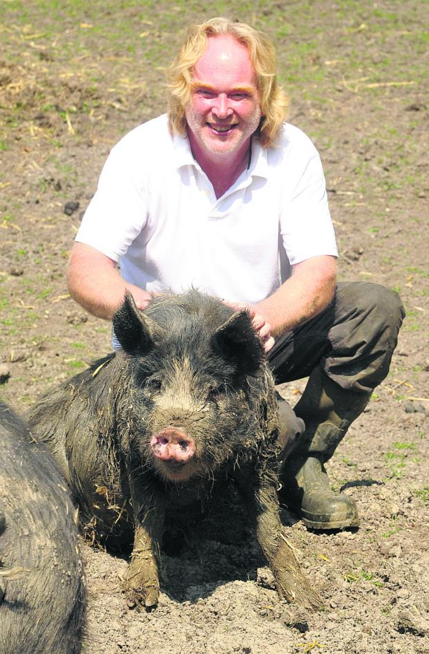 This Is Wiltshire: Robert Buttle and wife Sara are building up their herd of a rare breed British pigs in Compton Bassett
