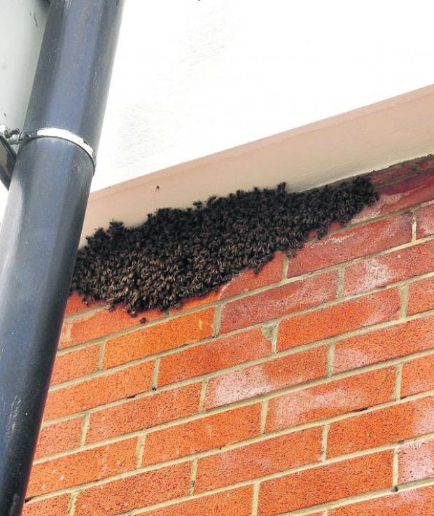 This Is Wiltshire: The bees make their home underneath the eaves