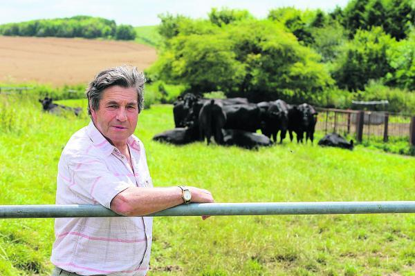 This Is Wiltshire: Richard Green with cattle that escaped after the gate was left open by walkers