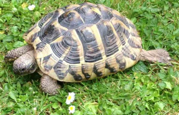 This Is Wiltshire: Have you seen a runaway tortoise in Bradford on Avon?