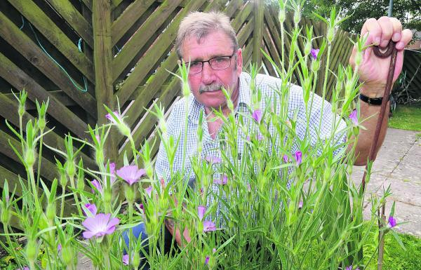 This Is Wiltshire: Nigel Crooks with his flowers