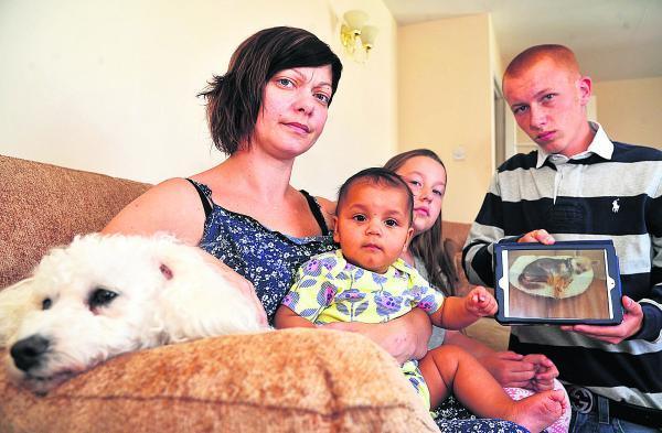 This Is Wiltshire: From left, Missy the dog, Marie Burns, Mia Burns, Francesca Burns and Tom Davies holding a picture of Pepe who was killed in the attack. Picture: DAVE COX