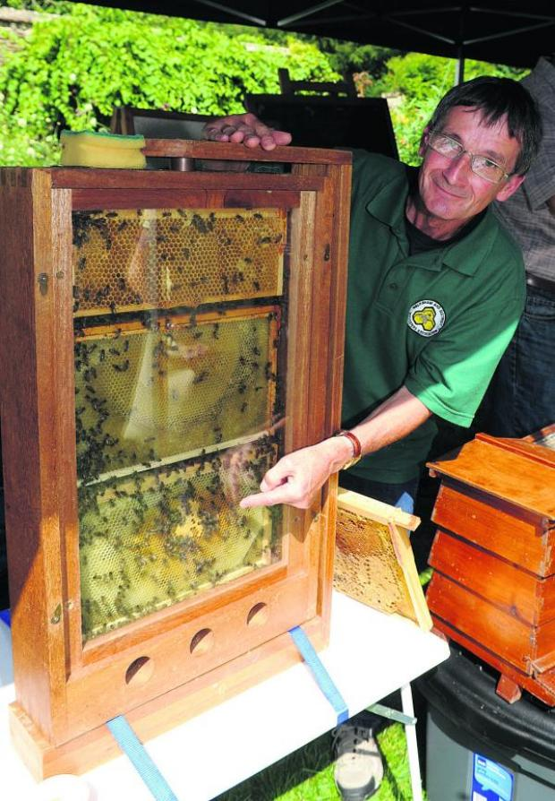 This Is Wiltshire: Roger Froud of the Melksham Beekeepers' Association shows off an observation hive at a previous bee and honey day at Lacock