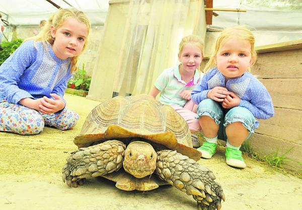 This Is Wiltshire: Taking it nice and slow at Studley Grange as children get to meet and feed the animals. Pictured are Holly, Ella and Isabelle with George the Sulcata Tortoise