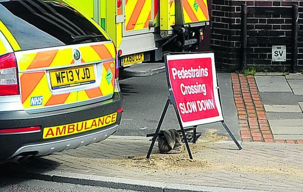 This Is Wiltshire: Woman's plea after Regent Circus accident