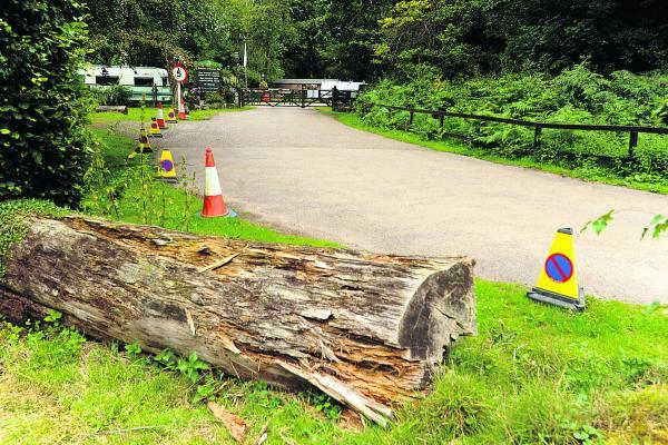 This Is Wiltshire: Log barriers have been put down to protect tree roots