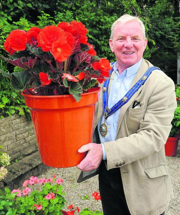 This Is Wiltshire: Bradford on Avon mayor Cllr John Potter brings out the big begonias to promote the town's forthcoming Flower and Produce Show scheduled for September 7