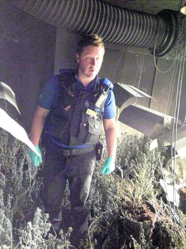 This Is Wiltshire: An officer with some of the plants