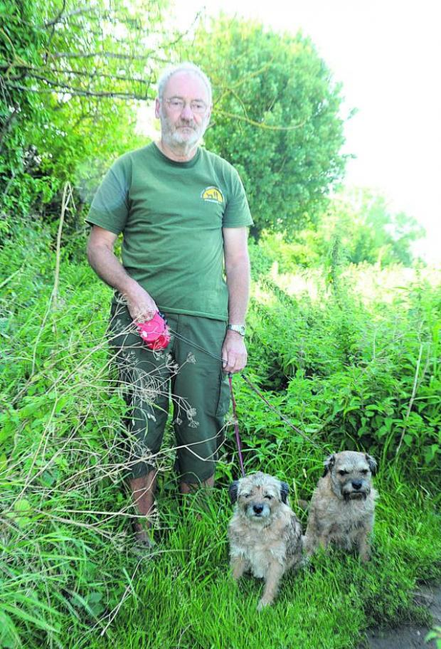 This Is Wiltshire: Adrian Bass at one of the  overgrown footpaths with his border terriers Oscar and Tasha
