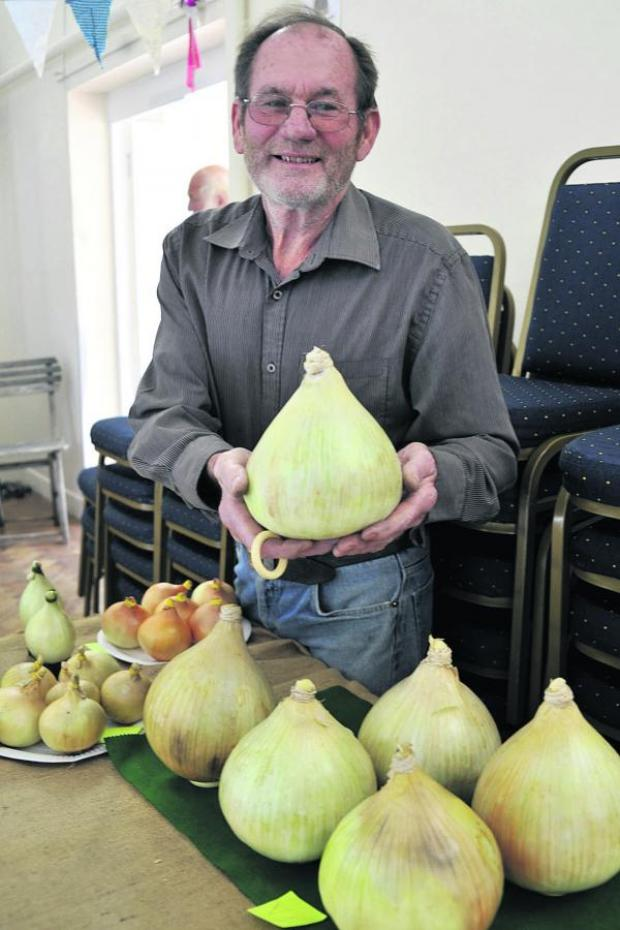 This Is Wiltshire: Cedric Connor shows off his giant onions