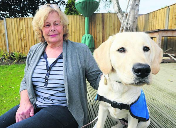 This Is Wiltshire: Anne Cole with five-month-old Guide Dog puppy Phoenix