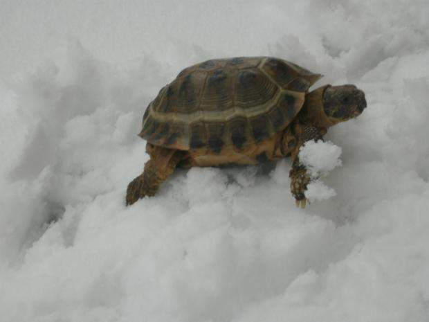 This Is Wiltshire: Have you seen runaway tortoise Boris in Bradford on Avon?