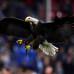 Police swoop to conquer 'by using eagles to tackle rogue drones'