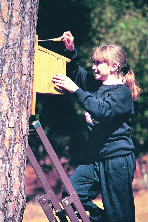 This Is Wiltshire: It isn't too late to put up nestboxes for the spring, says the RSPB