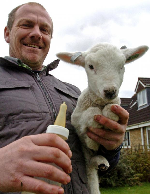 This Is Wiltshire: Farmer's mystified over lamb prank