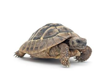 An 80-year-old tortoise has gone missing from Calne