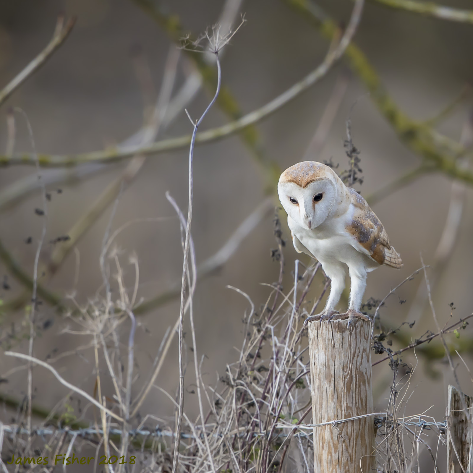 RSPB South Wilts May Slide Show